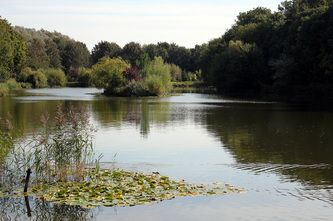 taken by Rich Cocovich of Global Star Capital, private fishing lake in Yorkshire. Http:www.globalstarcapital.com