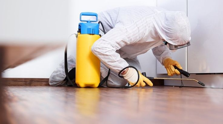 Pest Control Maidenhead Providing Service That Are Second To None - Pest Control Maidenhead provides the best pest control services. They have immense experience in agricultural pest control.