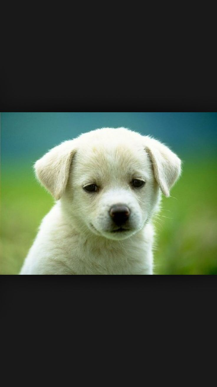 Ένα από τα πιο όμορφα σκυλάκια!