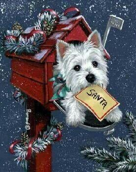 Westie waiting for Santa with wish list!
