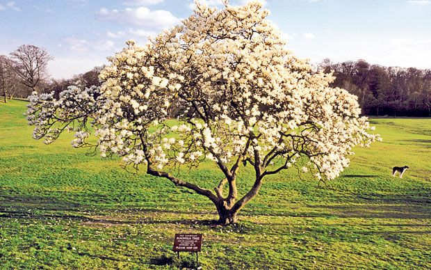 Our gardening agony aunt solves your gardening problems. This time: drastic magnolia  pruning, bark paths and other planting puzzles