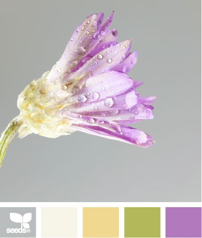 I think this is it!   I am in love with this combo for Clara's room! petal hues: Color Palettes, Bathroom Colors, Design Seeds, Bedroom Colors, Color Combinations, Colour Palettes