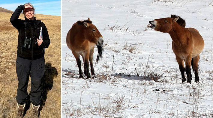 Hur ser en hästs medvetande ut egentligen? Hur lär den sig nya saker och hur uppfattar den världen?