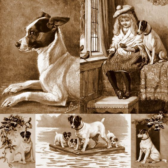 Old time Ratties #Vintage #Rat #Terrier LOVE my Mr. Maxie :D