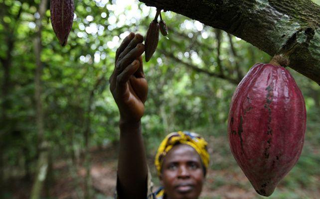 Te invitamos a conocer la situación actual de las mujeres, rurales y trabajadoras del cacao. ¡Mucho por hacer en materia de igualdad!