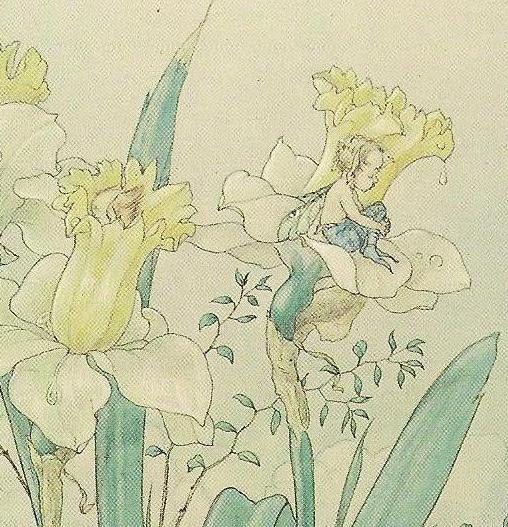 Harold Gaze Flower Fairy Art on Marcel Schurman Vintage Postcard - little fairies in daffodil flowers. $5.00, via Etsy.