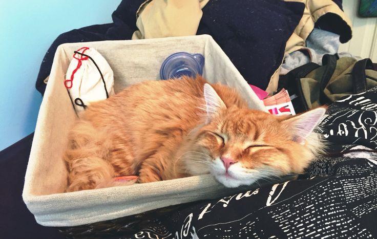 Chester, the Orange Cat
