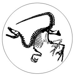 1000+ images about Velociraptor on Pinterest | Dinosaurs ...