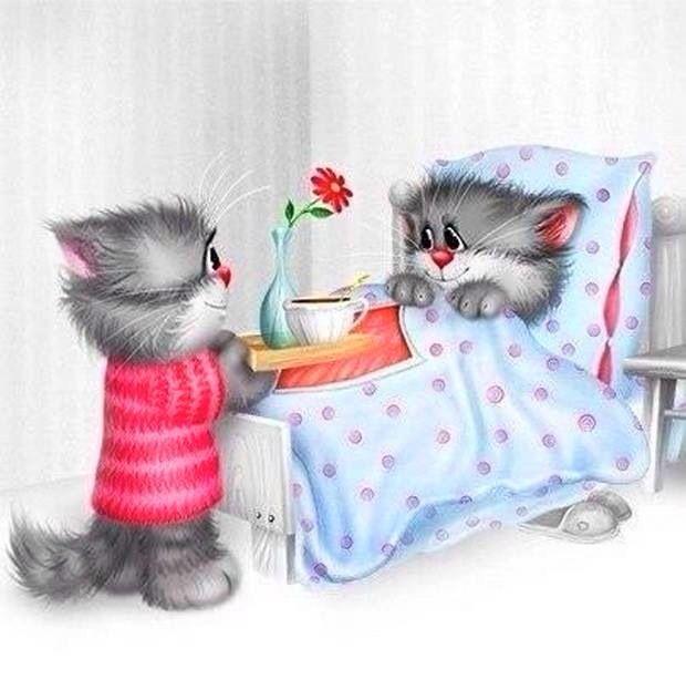 Мушкетера клеш, доброе утро прикольные картинки котики