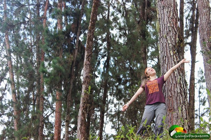 Who knew - pine trees in Panama! This is near Volcan Panama at Canyon Macho de Monte.
