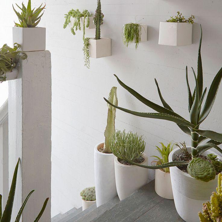houseplant-lined-stairwell-sun-0116-xl.jpg 2,000×2,000 pixels