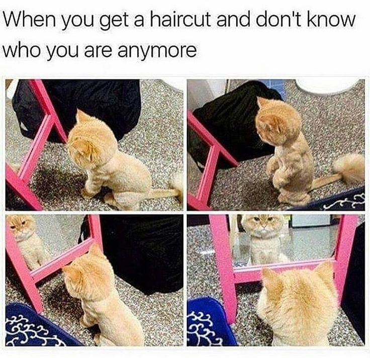 Getting a new haircut