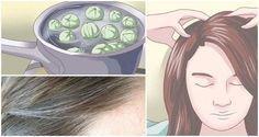 Si tu cabello ha comenzado a mostrarse canoso pero no quieres teñirlo esta puede ser la solución perfecta para ti. Anuncios Todo lo que tienes que hacer es preparar la siguiente receta para deshacerte de los molestos pelos blancos. Remedio para las canas En lugar de ir por una caja de tinte y recubrir tus …