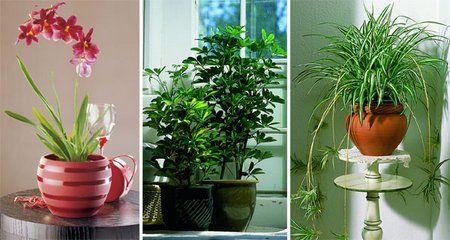 First Aid For House Plants | www.coolgarden.me