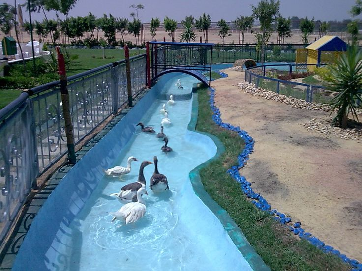 Image Result For Pool Chicken Swimming Pond Ponds And
