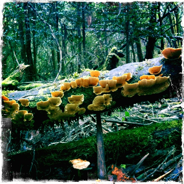 Fungi at Mt Field National Park, Tasmania.