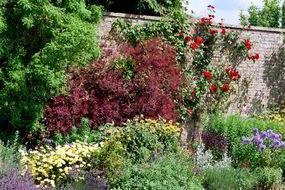 Olive trees, citruses, oleander or bougainvillea in pots so you can take them into the conservatory in winter. Evergreen aromatic herbs: rosemary, lavender, ornamental sage, thyme and bay.