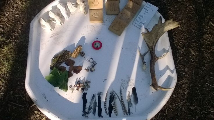 Displaying evidence from our Nature Detective Training. Catherine (BBOWT)