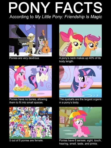 MLP Pony Facts