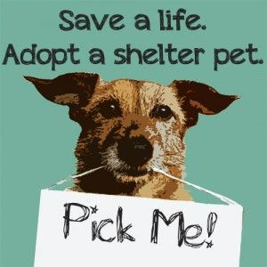 """Pick a shelter pet and save a life. -- At the Humane Society of Fremont County there are lots of amazing animals just waiting to become your best friend. Visit us in Canon City, Colorado and """"like"""" us on Facebook. www.Facebook.com/HumaneSocietyFremontCounty"""