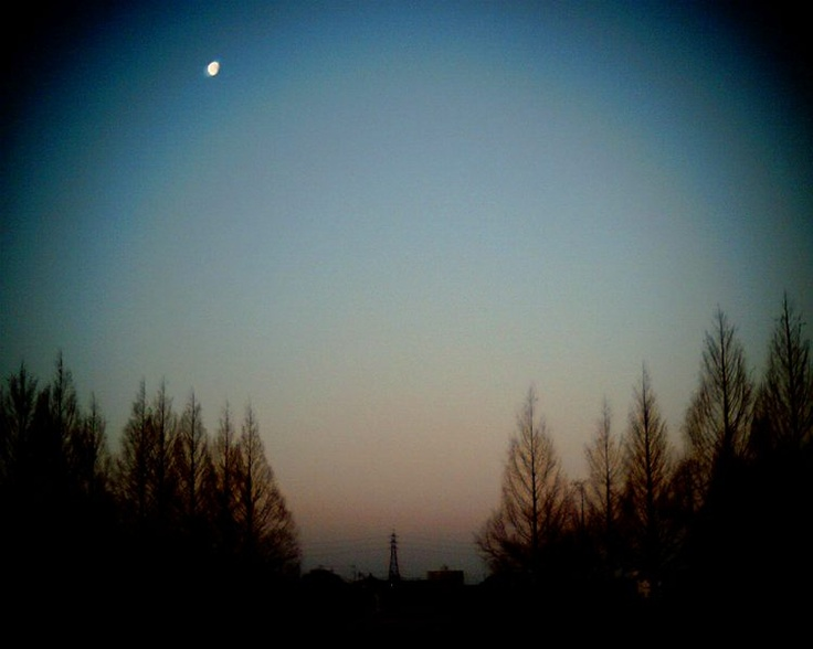 Morning Moon.