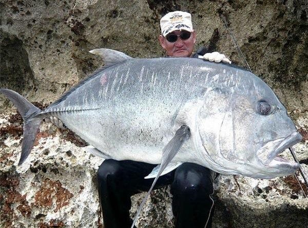 World record biggest fish in the world ever caught big for World largest fish