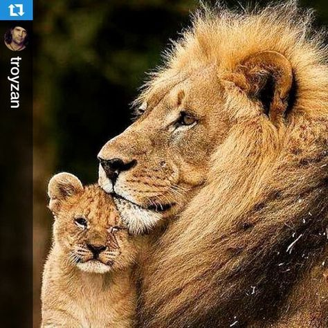 As a frequent visitor to Africa and an ardent appreciator of its cultures, wildlife and beauty, this sickens me. 55k can provide food and an education to ALOT of children in Zimbabwe. Even the Masai do not kill the lion unless it directly threatens their livestock. #Repost @troyzan with @repostapp.