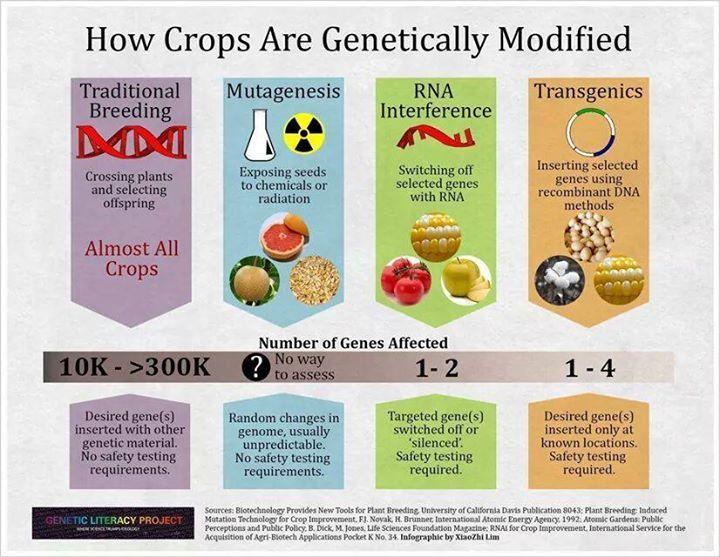 Ways of genetically modifying crops