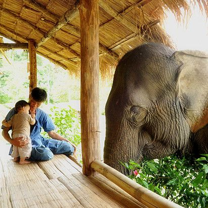 Elephant Sanctuary, Thailand Help me find my trip to Thailand to work with these amazing creatures! http://www.gofundme.com/agqke4