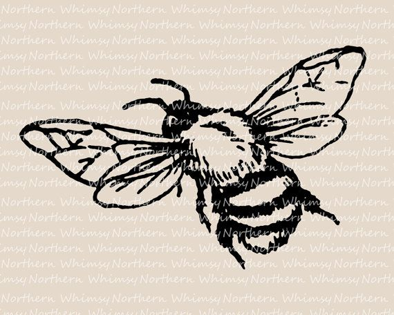 Bee Clip Art - Vintage Bumble Bee Image - Bee Illustration - Insect Clip Art…