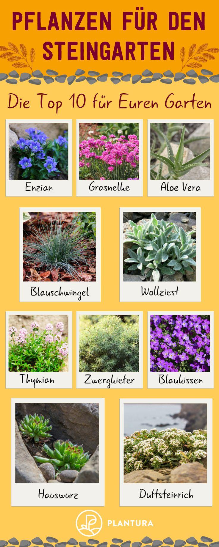 Pflanzen für den Steingarten: Unsere Top 10
