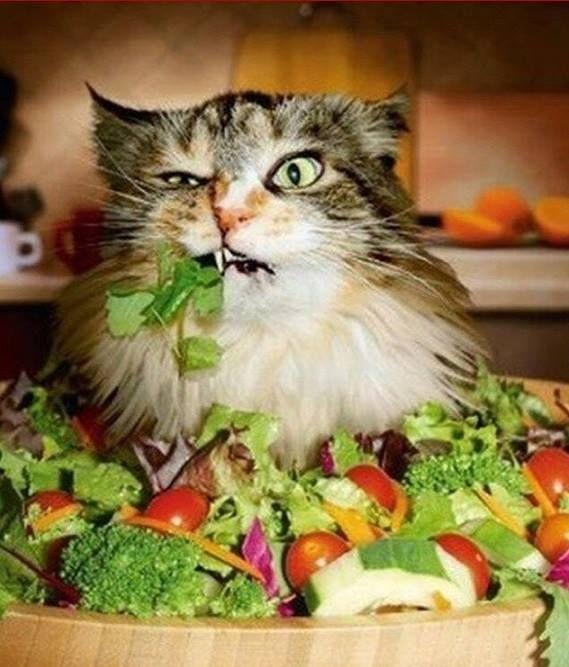 Nada de cara feia! Quer emagrecer? Tenha as saladas como aliadas da sua Reeducação Alimentar! Torne-as atraentes, varie os ingredientes, faça com que fiquem bem coloridas e nutritivas.Você, ao contrário do gato aí da foto, vai amar!