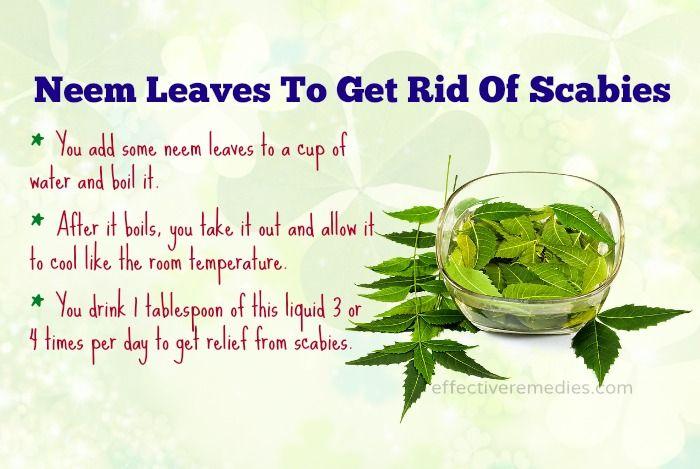 18 Natural Home Remedies For Scabies Treatment Humans – Fondos de