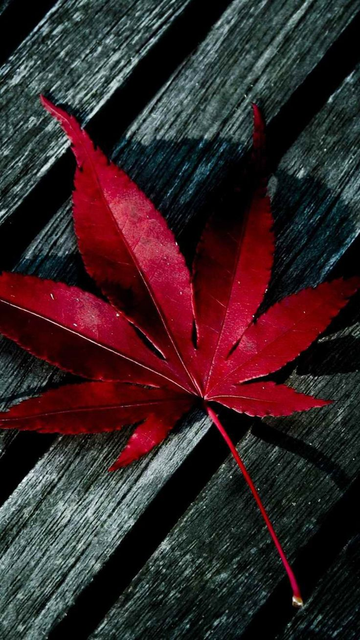 [Leaves] Maple- iPhone wallpaper