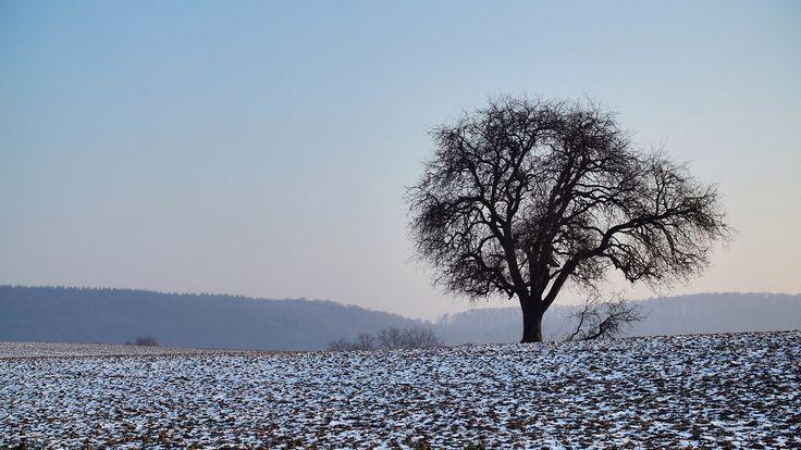Lonely Tree / Einsamer Baum