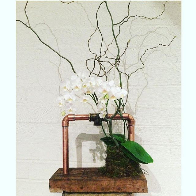 Bloodwood Botanica | Copper Floral Sculpture Nature Reclaiming! Recycled wooden base with copper piping and a mini Phalaenopsis Orchid