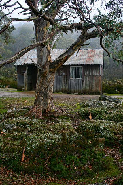 ♥ Mt Field National Park ~ Tasmania