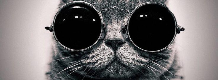 Nueva #Portada Para Tu #Facebook   Gatos Con Gafas    http://crearportadas.com/facebook-gratis-online/gatos-con-gafas/