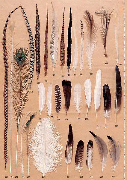 羽のフェザーと羽根の羽根ペンの販売|羽と羽根の専門店  カマタック