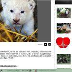 I leoni bianchi rarissimi di Corriere.it e l'esigenza di fare click