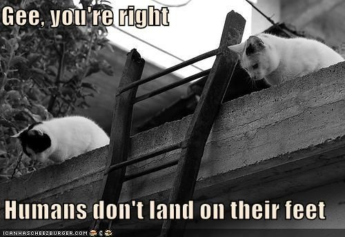 Funny Pictures with captions - Cat warriors