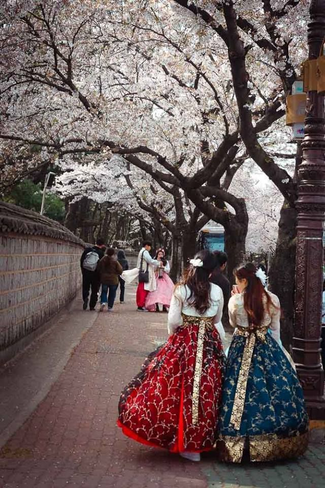 Cherry Blossoms and traditional Hanbok dresses in South Korea.