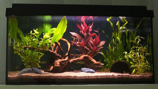 I love the simplicity of this Freshwater aquarium... would allow me to play around with aquascaping without breaking the bank