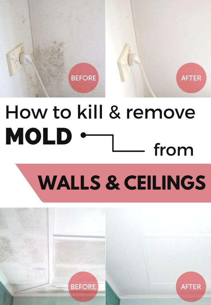 Pin By Bobbychaltonishero On Black Mold Remove Mold From Walls Cleaning Painted Walls Mold Remover