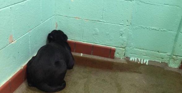 Le immagini di questo povero cane che hanno commosso il web, ecco come lo hanno terrorizzato - http://www.sostenitori.info/le-immagini-povero-cane-commosso-web-lo-terrorizzato/254402