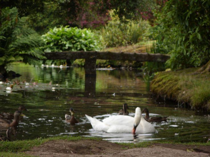 Swimming Ponds: Natural Pleasure In Your Garden | ECOM Akademie