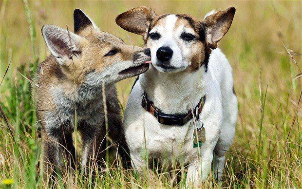 Warum streicheln wir den einen und jagen und töten den anderen? Beide wollen leben! Beide haben das Recht auf ein selbstbestimmtes Leben!    Wir wünschen uns eine Welt, in der wir mit allen Lebewesen friedlich zusammen leben können.    Eine Welt, in der wir sie nicht mehr für ihr Fleisch, ihre Haut, ihre Milch oder Eier oder für unsere Unterhaltung ausbeuten und umbringen.    Lasst uns in Achtung mit den anderen Lebewesen auf diesem Planten zusammenleben.   www.animalequality.de/speziesismus