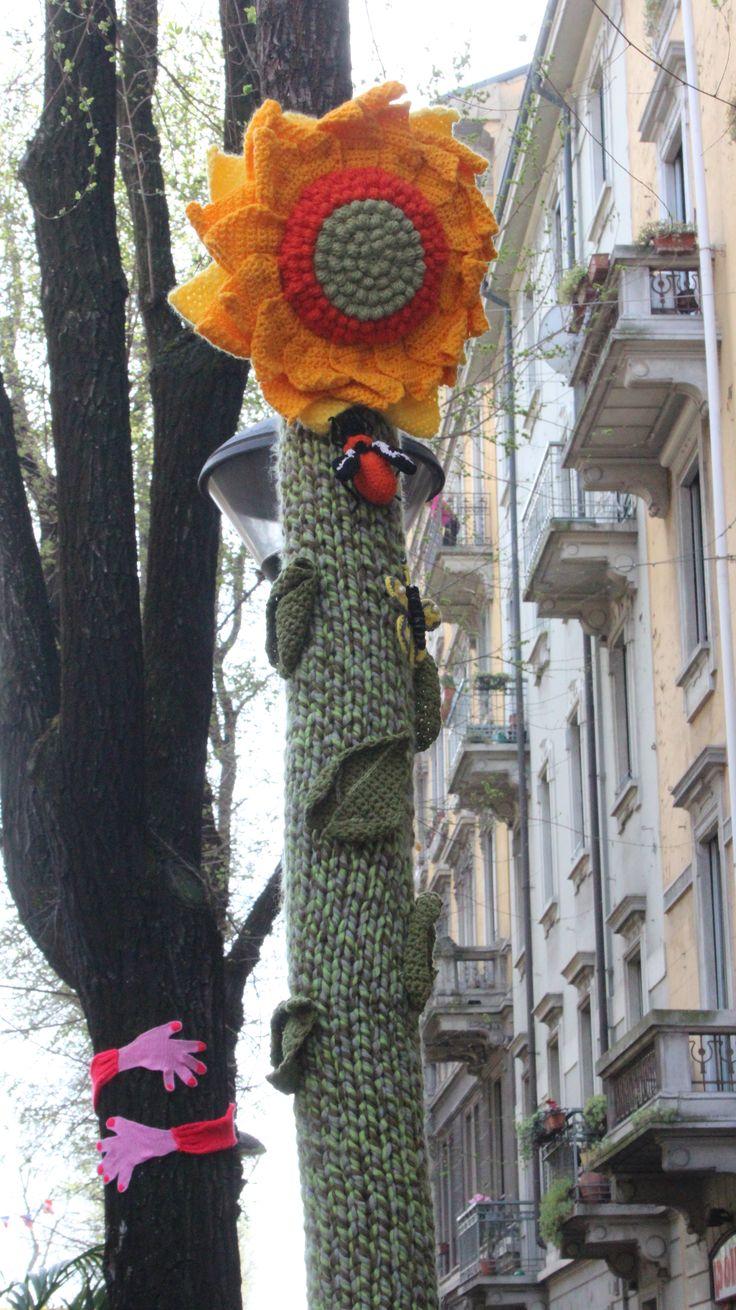 Tredesin de Marz sunflower