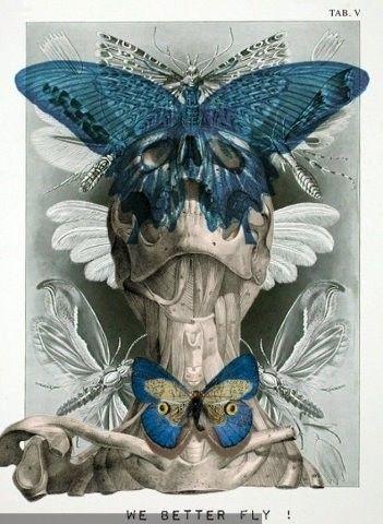 Isabelle Dalle  Skull