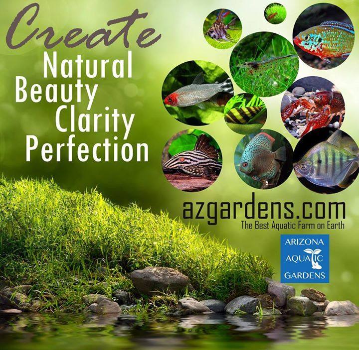 Tropical Fish, Snails, Shrimp, Marine, Pond Fish, Aquatic Plants & supplies for Aquariums & Ponds! Shipped to your door from our family to yours since 1987. Free Shipping on orders $199+. Order your box of happiness today! Thank you! https://www.azgardens.com/ #PetOxy.Com